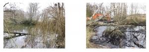 Die Situation am Wendesser Teich vor Beginn der Arbeiten Anfang des Jahres: vollständig zugewachsen, verschlammt und umgestürzte Bäume.