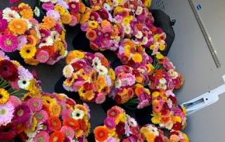 Die CURT MAST Jägermeister STIFTUNG verteilt Blumengrüße in der Stadt und im Landkreis Wolfenbüttel